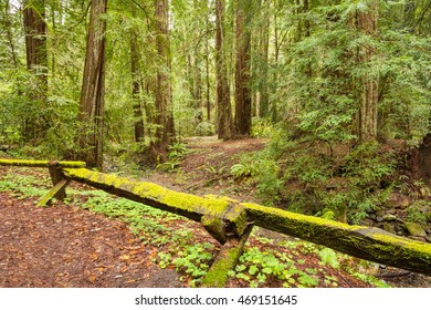 Armstrong Redwoods State Park, A California State Park