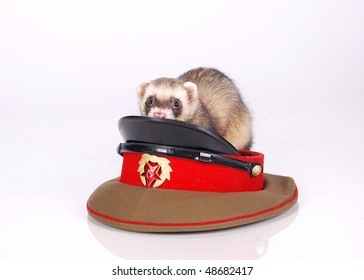 army sable ferret