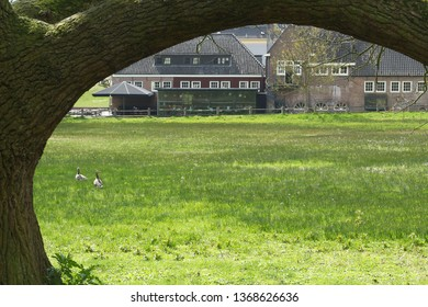 Arnhem, Netherlands - April 13, 2019: View at the ancient water mill in Dutch park Sonsbeek, Arnhem. A large curved branch from an old oak tree completes this idyllic view.