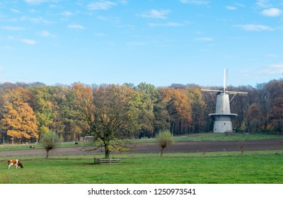 ARNHEM, NETHERLANDS - NOVEMBER 23, 2018: Big white windmill with cows grazing in front of it in the open air museum in Arnhem, Netherlands on a day in the fall