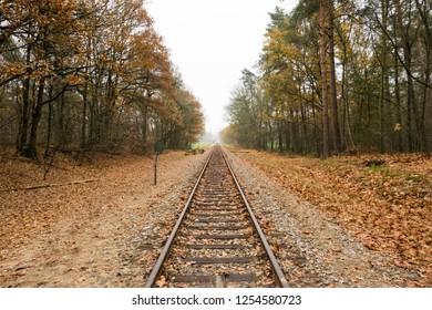 ARNHEM, NETHERLANDS - NOVEMBER 24, 2018: Train tracks in a forest near Arnhem, Netherlands