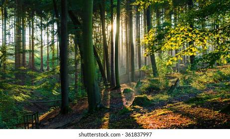Arnsberger Wood