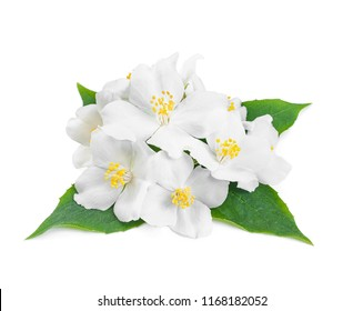 aroma composition with jasmine flowers and green leaves on white background