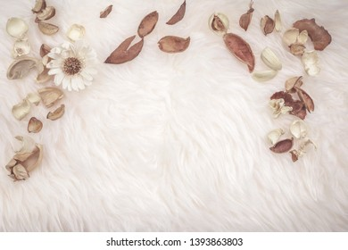aroma therapy and spa object in spring season with dry tropical leaf decorate on white wool or fur background