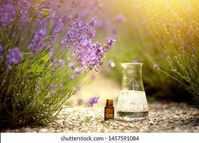 Aromatherapy oil and lavender flowers. Aromatic oil essense for SPA. Bottle of essential aromatic oil surrounded by fresh flowers.