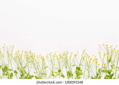 Aromatherapy theme, handmade cosmetic and medical flowers herbsspace. Space for text.