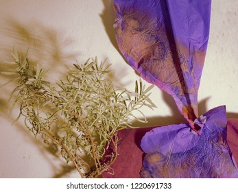 Aromatherapy wallpaper: blue eletric paper and Lave.nder plant on dirty white background