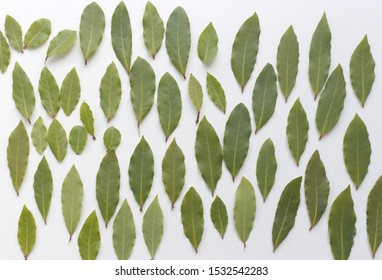 Aromatic bay leaves isolated on white background. The Bay leaf is an aromatic leaf commonly used in cooking. It can be used whole, or as dried and ground.