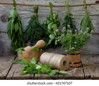 aromatic herbs lovage, dill, cilantro, hyssop, sage, blue fenugreek, thyme