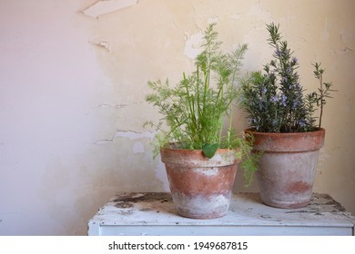 Aromatic Herbs in a Vase: Rosemary and Fennel - Shutterstock ID 1949687815