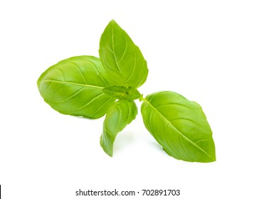 Aromatic leaves of basil isolated on a white background