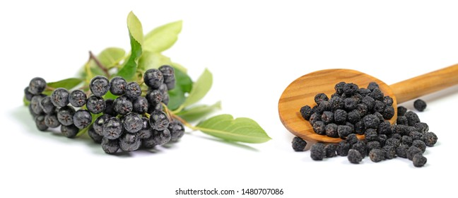 Aronia berries, aronia melanocarpa, in a collage