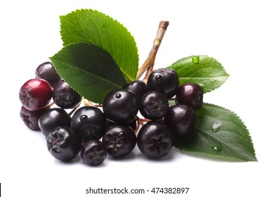 Aronia melanocarpa (black chokeberry) with leaves. Clipping paths, shadows separated, infinite depth of field