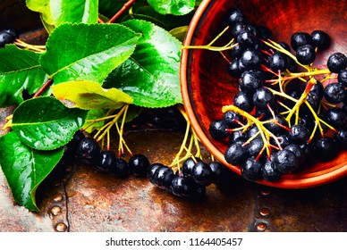 Aronia melanocarpa or black chokeberry with leaves.Herbalism