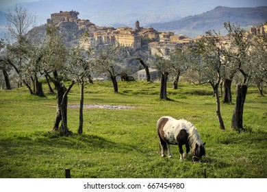 Arpino village seen from a nearby olive grove with a pony in foreground