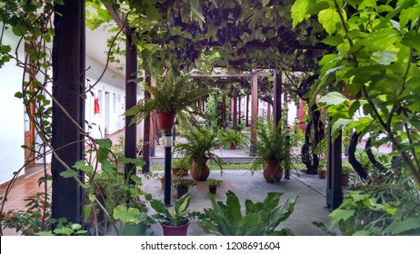 arquitecture plants nature