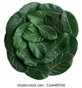 Arranged or decorate leaf, leaves. There is an art design frame leaf. A circle leaf design backdrop, wallpaper, art work