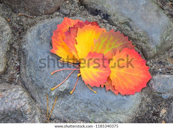 An arrangement of autumn leaves that are red, green, yellow, and brown and lye on a big rock in the middle of a public park during a sunny autumn day in Poland
