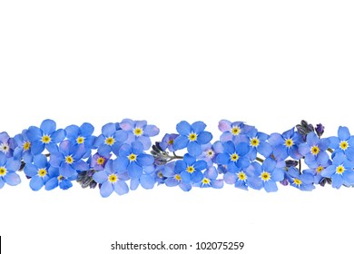 Arrangement of blue forget-me-not flowers isolated on white background