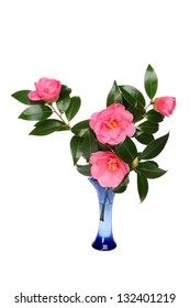 Arrangement of camellia flowers and foliage in a blue glass vase isolated against white