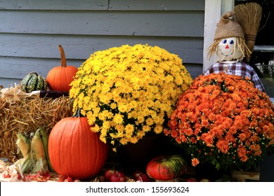Arrangement from Flowers, Bale of Hay, Pumpkin, Squashes, Apples, Maize, Scarecrow and dry leaves in front of Old Barn as decoration for Thanksgiving Day.