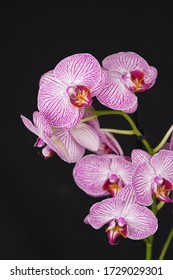 Arrangement, green leaf, orchid with white pink purple flowers