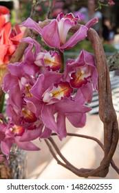 arrangement of pink cymbidium orchid