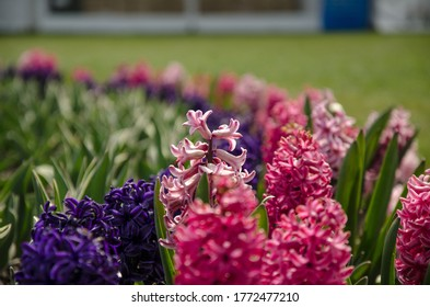 An arrangement of pink and purple flwoers.