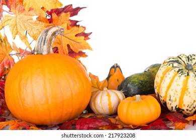 Arrangement of pumpkins and gourds with autumn leaves on a white background with copy space