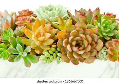 Arrangement of red green Echeveria and Sedum Succulent plants flowering houseplants in square pot planter and white background