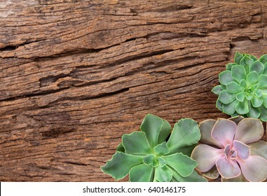 arrangement of the succulents or cactus on wooden background as frame border