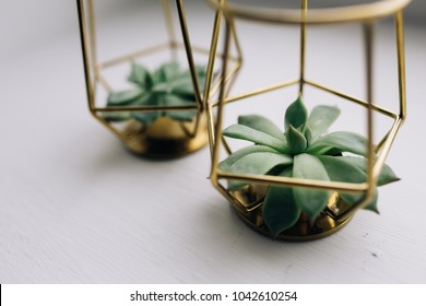 arrangement of the succulents or cactus succulents overhead or top view. plants in the iron decoration of gold color. decoration for the holiday table, and wedding ceremonies