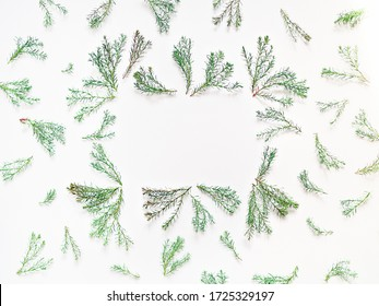 Arrangement of thuja branches. Frame of green twigs with soft needles is on a white background. Flat lay. Copy space.