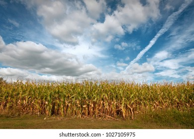 An array of cloud types crowd the sky above the cornfield
