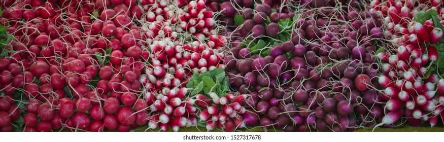 Array of colorful radish varieties at an organic farmers market