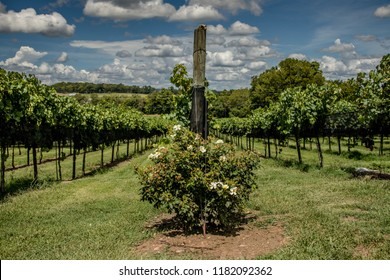 Arrington Vineyard in Tennessee, USA