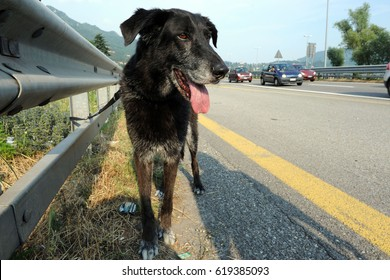 With the arrival of warm weather and summer increases the cases of abandoned dogs on the highway - Pet domestic abandoned at the roadside