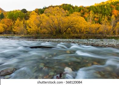 Arrow River in Autumn in Arrowtown, South Island, New Zealand