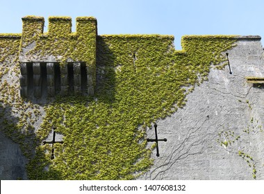 Arrow slits and ivy on a crenellated stone wall with decorative machicolation.