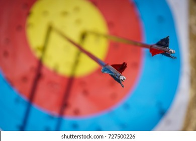 Arrows in archery target on archery range