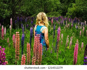 Arrowtown / New Zealand - 12 21 2016: young female traveller gettng lost in beautiful meadow with blooming lupine flowers (Lupinus perennis)