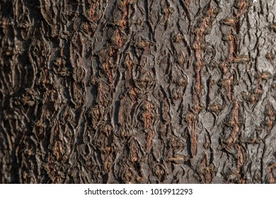 Art, abstract and artistic background pattern macro lens magnification view of tree bark in the forest