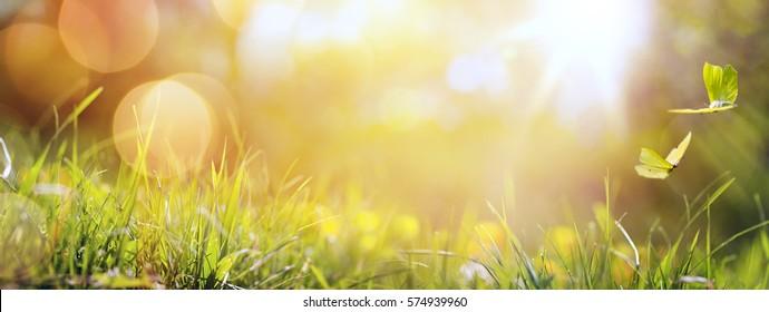 abstrakte Kunst, abstrakter Frühlinghintergrund oder Sommerhintergrund mit frischem Gras und Schmetterling