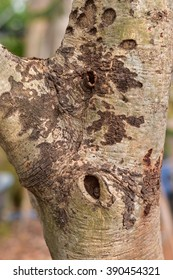 Art of bark.