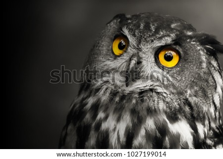Art Black White Portrait Owl Bubo Stock Photo Edit Now 1027199014