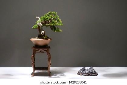 The art of bonsai display