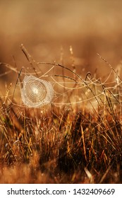 Art of cobweb with dew on winter morning, golden sunrise shines onto the cobweb and wild grass, bright transparent and glittering, blurred fields backgrounds. Selective focus.