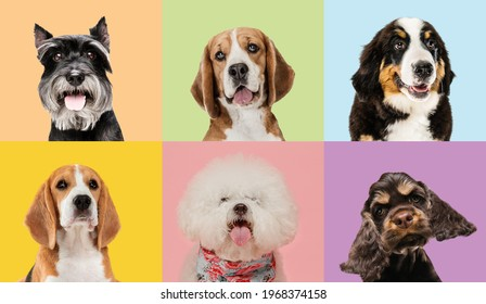 Art collage made of funny dogs different breeds on multicolored studio background. Concept of motion, action, pets love, animal life. Look happy, delighted. Copyspace for ad, flyer.