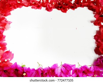 Art of colors flowera, pink flowers, red flowers on white background