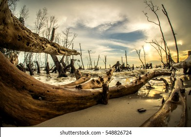 the art of Dead Mangroves forest in beach Malaysia